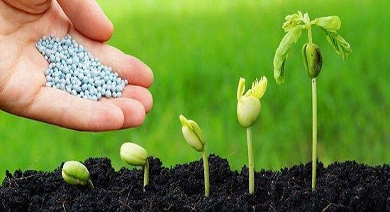 افزایش 10 درصدی محصولات کشاورزی با کودهای زیستی