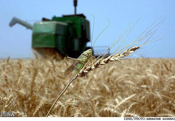 فراوری تجاری دشمنان طبیعی آفات کشاورزی توسط محققان دانشگاهی
