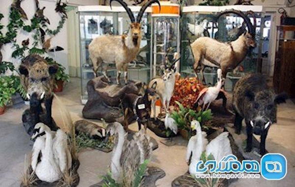 اعلام بازسازی موزه هفت چنار تا انتها سال