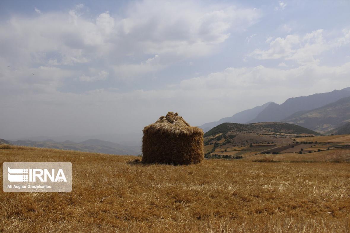 خبرنگاران حدود 127 هزار تن گندم به سیلوهای خراسان شمالی تحویل شد