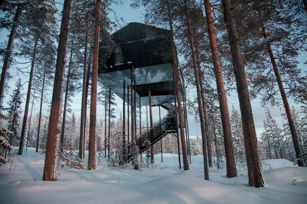 هتل درختی زیبا در یکی از بهترین جنگل های سوئد، عکس